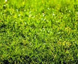 assorating - energia verde -